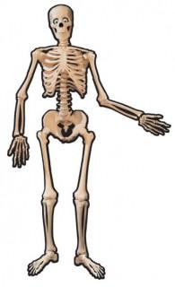 Skelett Pappfigur beweglich Halloween-Deko weiss-schwarz 140cm
