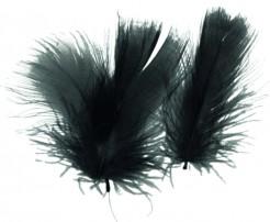 Federn schwarz