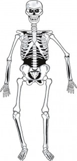 Halloween Grusel-Skelett Wanddeko 140cm