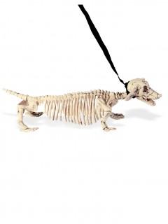 Hunde-Skelett an der Leine 55 cm beige