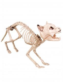 Skelettkatze Halloween-Deko weiss 60 cm
