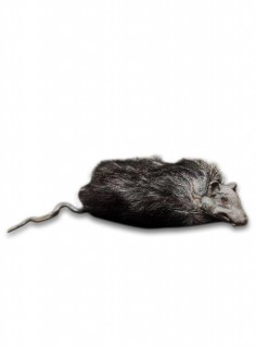 Ratte mit Fell Halloweendeko grau 23 x 7 cm
