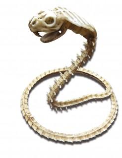 Skelett-Kobra weiss 50 x 42 cm