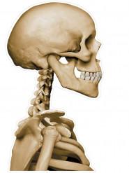 Skelett-Beifahrer Halloween-Aufkleber für das Auto beige 30x43cm