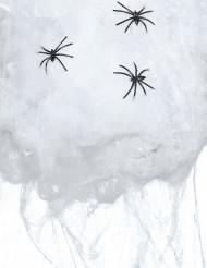 Halloween Spinnennetz mit Spinnen weiss-schwarz
