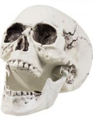 Schauriger Totenkopf Totenschädel Halloween Party-Deko weiss 20x15cm