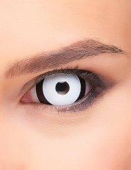 Sclera Kontaktlinsen Black 'n' White schwarz-weiss