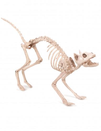 Skelett-Katze Halloween 'Hängedeko beige 60x12x25cm