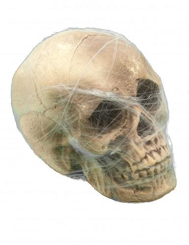 Totenschädel mit Spinnennetz Halloween-Partydeko beige