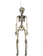 Hängedekoration Goldenes Skelett 42 cm Halloween beige