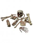 Halloween-Dekoration Blutige Skelettknochen braun-rot