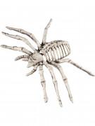 Spinnen-Skelett Halloween-Deko beige 22x13x6,5cm