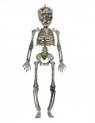 Gruselige Skelett-Hängedeko weiss-grau 30 cm