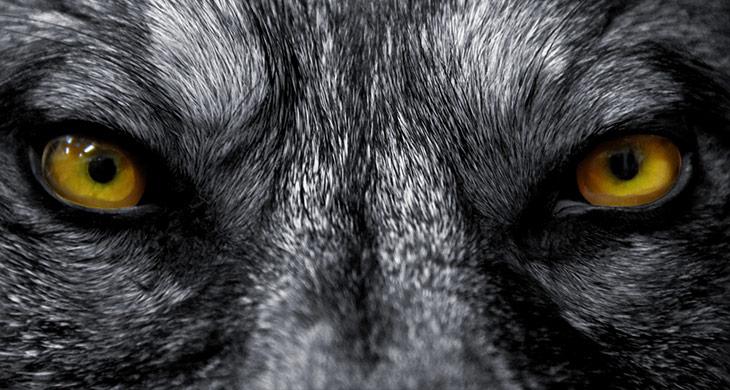 Die Wahrheit über Werwölfe