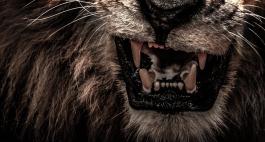 Löwen - Die 10 tödlichsten Tiere für den Menschen, Teil 1